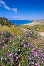 Spring flowers at cape greco,cyprus Royalty Free Stock Photo