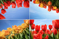 Spring flowers collage. Dutch country. Royalty Free Stock Image