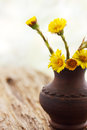 Spring flowers coltsfoot in ware pottery handmade Royalty Free Stock Images