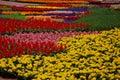Spring Flowers Display In Pion...