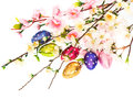 Spring flowers end easter eggs decoration over white background Stock Photography
