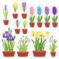 Spring flowers in flower pots. Irises, lilies of valley, tulips, narcissuses, crocuses and other primroses. Garden