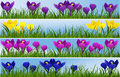 Spring flowers four floral banners with crocuses Stock Image