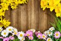 Spring flowers framing wooden board Royalty Free Stock Photo