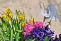 Spring flowers and gardening tools Royalty Free Stock Photos