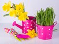 Spring flowers and green grass with garden tools . Royalty Free Stock Photo