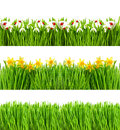 Spring flowers. Green grass with water drops Floral banner