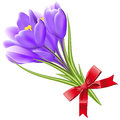 Spring flowers isolated on white background vector vector illustration crocuses Royalty Free Stock Photography