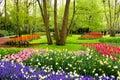Spring flowers, Keukenhof Gardens Royalty Free Stock Photo