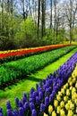 Spring flowers in keukenhof park beautiful netherlands holland Royalty Free Stock Images