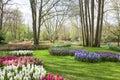 Spring Flowers In Keukenhof- T...