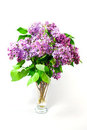 Spring flowers lilac Royalty Free Stock Image