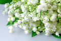 Spring flowers lily of the valley Stock Photo