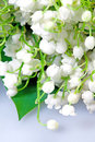 Spring flowers lily of the valley Stock Image
