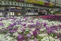 Spring flowers organic in michigan seasonal planter racks in greenhouse of local plants. Copyspace in top right.