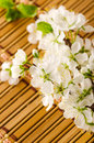 Spring flowers over bamboo background Stock Image