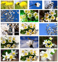 Spring flowers in a set Stock Photo