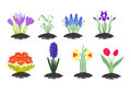Spring flowers six colourful separated vector images of first Royalty Free Stock Photo