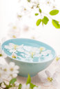 Spring flowers for spa and aromatherapy Stock Image