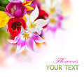 Spring flowers tulips border art design Stock Photos