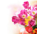 Spring flowers tulips bunch Stock Images