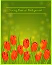 Spring Flowers Tulips Vector Illustration.