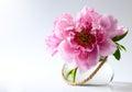 Spring Flowers In Vase On Whit...