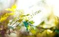 Spring Foliage Background