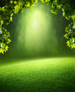 Spring forest background green leaves in deep Royalty Free Stock Images