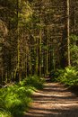 Spring Forest Path. Glenashdale Forest, Arran, Scotland. Royalty Free Stock Photo