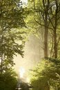 Spring forest path with morning sunbeams Royalty Free Stock Images