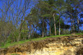 Spring forest on several underground soil layers Royalty Free Stock Photo