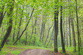 Spring Forest with Trail Royalty Free Stock Photo