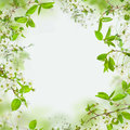 Spring frame of flowers and green leaves Royalty Free Stock Photos
