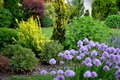Spring fresh garden with shrubs and perennials