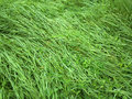 Spring fresh grass with deep of field outdoors photography green Royalty Free Stock Photo