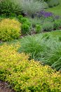 Spring garden with many different  species of plant