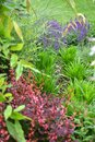 Spring garden with many different  species of plants