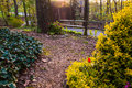 Spring garden scene under evening light Royalty Free Stock Photo