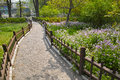 Spring garden the scenery of with walkway and violet orychopragmus flowers Royalty Free Stock Photography