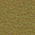 Seamless Texture of Spring Germinating Grass.