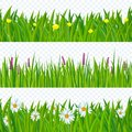 Spring grass and flowers.