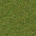 Spring grass seamless tileabletexture tileable texture of young Royalty Free Stock Image