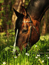 Spring grazing horse Stock Images