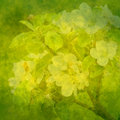 Spring green background with apple flowers