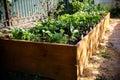 Spring green garden in a wooden box Royalty Free Stock Photo
