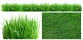 Spring green grass. Royalty Free Stock Photo