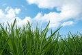 Spring green grass field landscape with and blue sky with clouds Royalty Free Stock Images