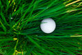 Spring green grass and golf ball Royalty Free Stock Photos