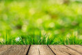 Spring green grass with green bokeh and sunlight wood floo Royalty Free Stock Image
